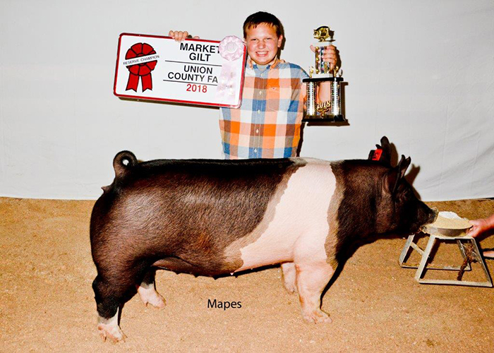 Reserve Grand Champion Market Gilt