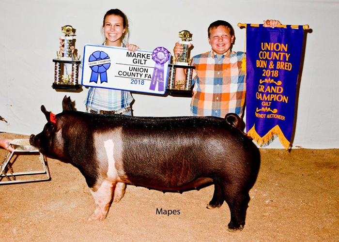 Champion Bred and Owned Market Gilt