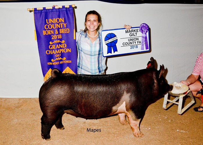 Grand Champion Market Gilt